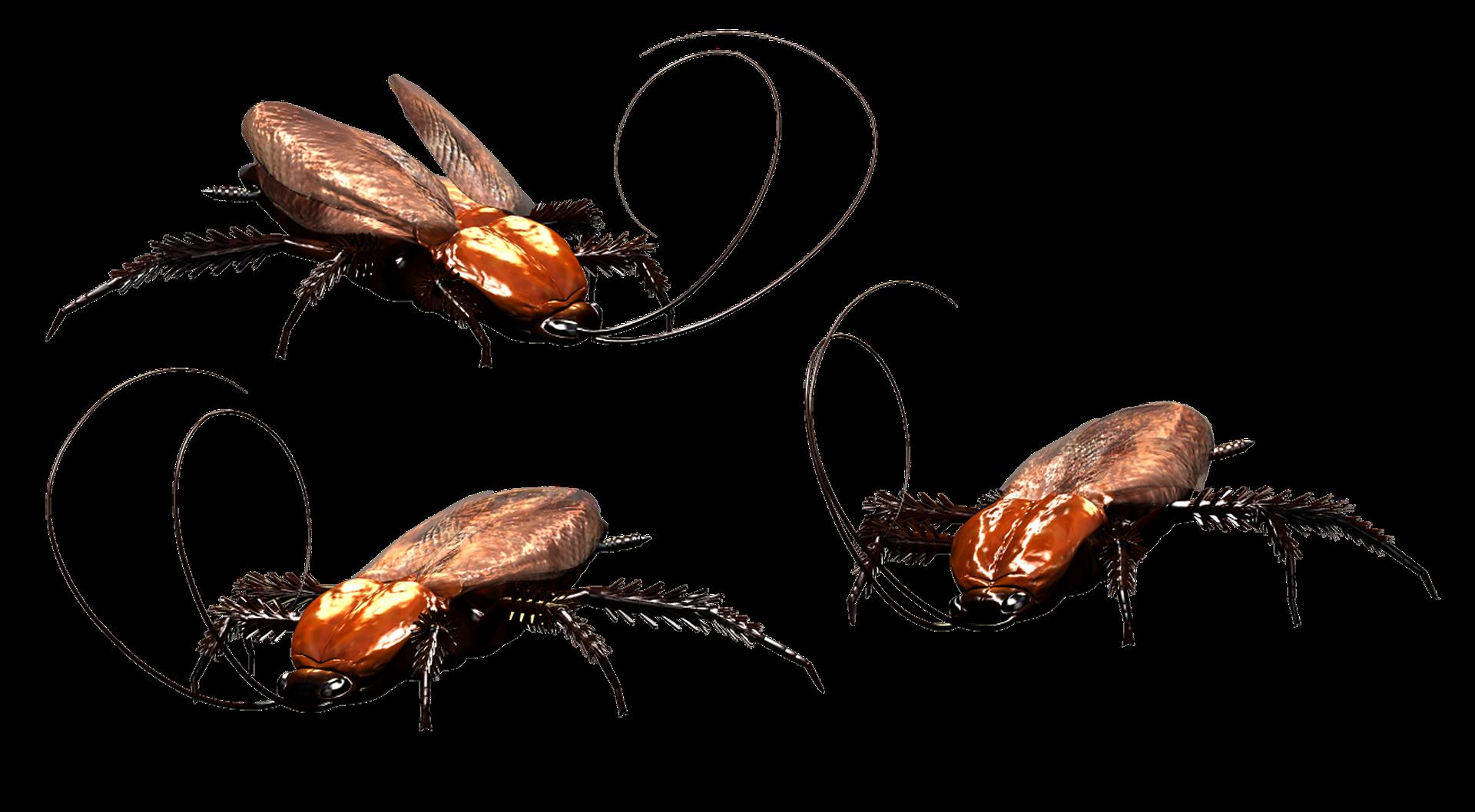 cockroach-3346121_1920